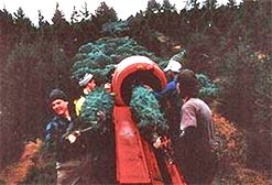 Baling harvested trees keeps us warm and the trees fresh